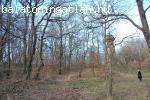 Eladó 5 hektár erdő