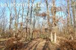 Eladó 16 hektár erdő