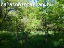 Õsfás nyaraló - Balatonakarattya
